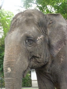 zoo-negara-malaysia-1418858-m